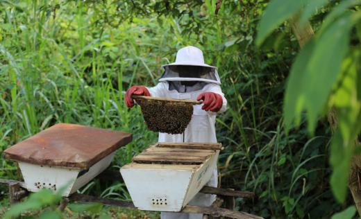John checks his beehives at his apiary in Ntoroko. Alun McDonald / Save the Children
