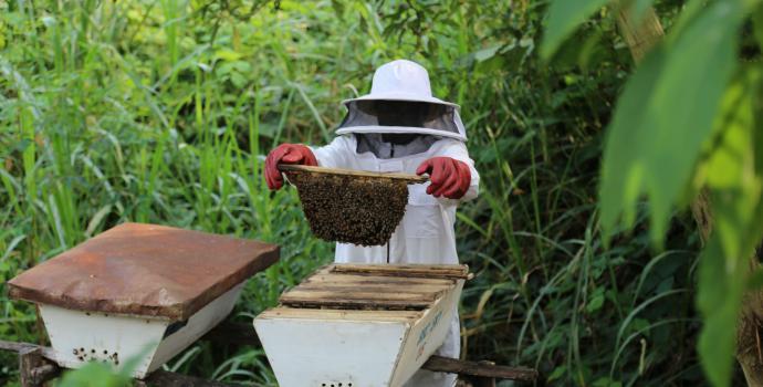 John checks his beehives at his apiary in Ntoroko. Alun McDonald / Save the Children