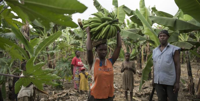 The family at work in the banana plantation. The family at home with the bananas they've grown. Hannah Maule-Ffinach / Save the Children